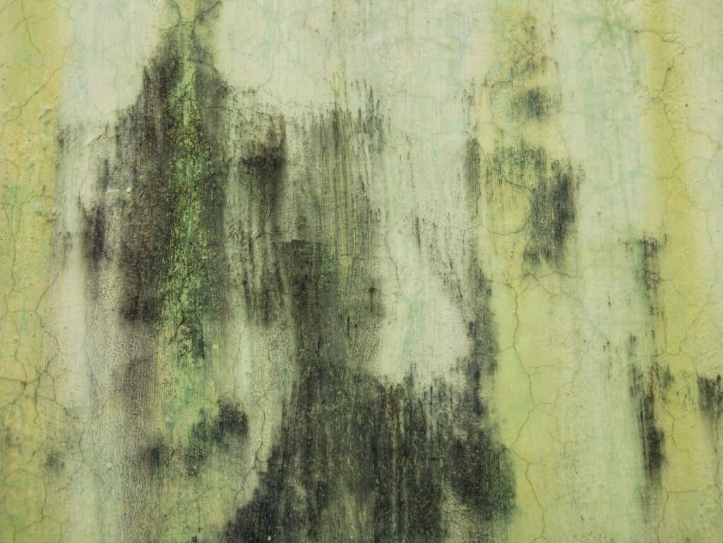 signs of mold presence in home